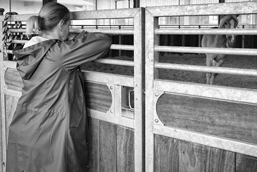 Pferde Coaching München